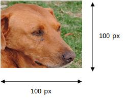 Réseau de neurones - Illustration en couleur d'un chien