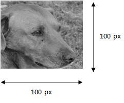 Réseau de neurones - Illustration en noir et blanc d'un chien